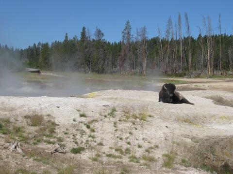 bison sauna