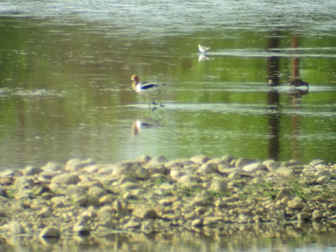 three waders